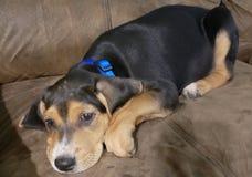 Kom op Puppy! stock foto