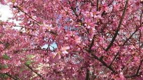 Kom precis in i blom i mars stock video