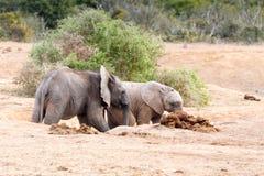 Kom Spel met me - Afrikaanse Bush-Olifant Royalty-vrije Stock Foto