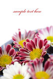 Kom van water en bloem-kuuroord concept Stock Foto