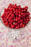 Kom van wilde aardbeien Royalty-vrije Stock Fotografie