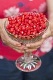 Kom van wilde aardbeien Stock Afbeelding