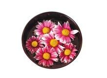 Kom water met bloemen Royalty-vrije Stock Foto's