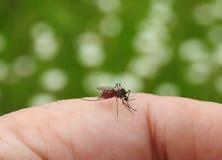 Komarów kąski w palcową skórę fotografia stock