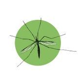 Komar顶视图,开会,剪影,传染媒介 库存图片