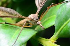 Komar na roślinie fotografia stock