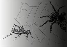 Komar och spindel Arkivfoton