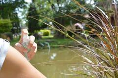Komara repellent kiść Zdjęcie Royalty Free