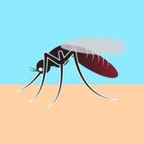 komara wyssać krew Fotografia Stock