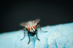 komarnica Fotografia Royalty Free