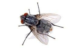 komarnica dom