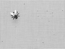 komarnica dom Fotografia Stock