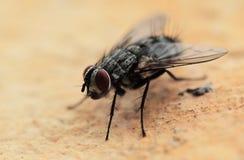 komarnica dom Zdjęcia Royalty Free