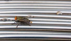 Komarnica insekt na Srebnym metalu w deseniowych liniach zamyka up obrazy royalty free