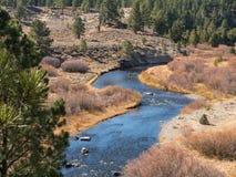 Komarnica połów na Małej Truckee rzece Fotografia Royalty Free