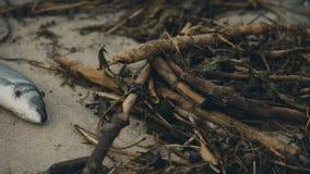 Komarnicy unosi się nad przegniłą ryba, odpad toksyczny krzywdzi naturę, powoduje illnesses zbiory