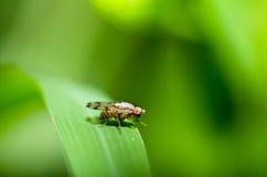komarnicy zielony liść natury gacenia skrytki świat Zdjęcia Royalty Free