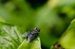 komarnicy zielony liść natury gacenia skrytki świat Obraz Stock