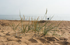 Komarovo beach of Gulf of Finland Stock Photo