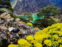 kombinacja kwiaty z naturą obraz royalty free