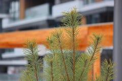 Kombinacja natura i domy z naturą i środowiskiem, bliżej do lasowego zbliżenia Choinka na obraz stock