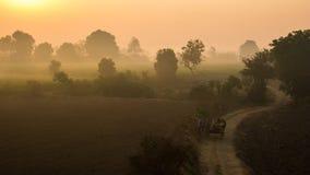 Kombination av mist och soluppgång royaltyfri foto