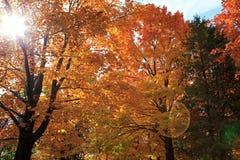 kombination av skapad olik bild tre för hdr för exponeringsfalllövverk Fotografering för Bildbyråer