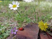 Kombination von Blumen mit Natur stockbilder