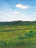 Kombinationshimmel och gräs royaltyfria bilder