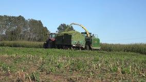 Kombinera den skördhavre och påfyllningen därefter in i traktorsläpet i lantgårdfält 4K stock video
