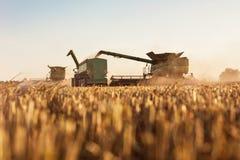Kombinera läggande tillbaka korn in i traktorsläpet arkivbilder