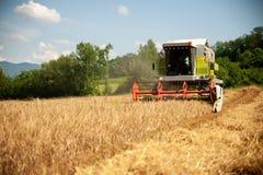 Kombinera plockningkorn på en varm sommareftermiddag - agricultur arkivbilder