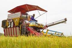 Kombinieren Sie Kornbauernhof während der Ernte am Reisfeld lizenzfreie stockbilder
