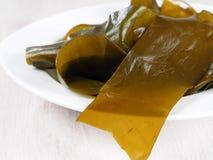 Kombu Kelp - Alga Kombu. Kombu kelp is a large brown algae seaweed. Binomial name: Laminaria Ochroleuca. It is an edible seaweed used extensively in Japanese royalty free stock photo