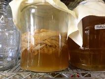 Kombucha, das in einem großen Glas, mit SCOBY (Mutter, braut) Stockbild