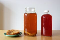 Kombucha mother or SCOBY and brewed kombucha tea Stock Image