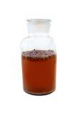 Kombucha with tea and juniper berries Stock Photos