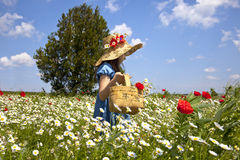 komes wiosna Obrazy Royalty Free