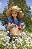 komes wiosna Zdjęcia Royalty Free