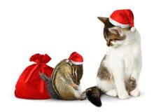 Komikerxmas-husdjur, rolig jordekorre och katt med den santa hatten och säcken Arkivbild