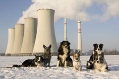 kominów psy Zdjęcie Royalty Free