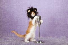 Komisches lustiges Kätzchen, das schwarze Pelztierperücke mit den großen Ohren halten auf Weinlesefälschungsmikrofon auf Stand tr Lizenzfreies Stockbild