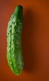 Komkommer Royalty-vrije Stock Foto's