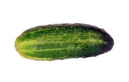 Komkommer royalty-vrije stock foto