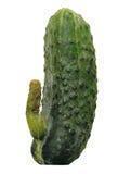 Komkommer Stock Foto's