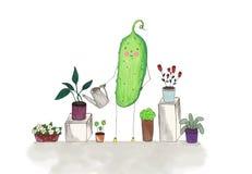 Komkommer het water geven bloemen Stock Afbeelding