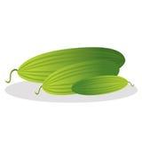 Komkommer vectorillustratie Stock Foto's