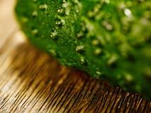 Komkommermacro Stock Foto