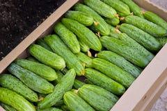 Komkommers. Royalty-vrije Stock Afbeelding