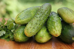 Komkommers Stock Afbeeldingen